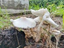 Gruppe des magischen Pilzes Stockfotografie