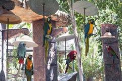 Gruppe des Papageiensitzens Stockfotos