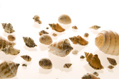 Gruppe des Seeshells getrennt auf Weiß Stockfotos