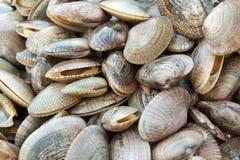 Gruppe des Shells Lizenzfreie Stockbilder