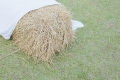 Gruppe des Strohs mit weißem Gewebe auf grünem Rasen Stockbilder