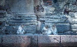 Gruppe des thailändischen Affen zusammen sitzend Stockfotografie