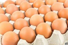 Gruppe Eier Lizenzfreies Stockbild