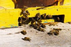 Gruppe einer Biene am Eingang zum Bienenstock des gelben Bienenstocks Lizenzfreies Stockbild