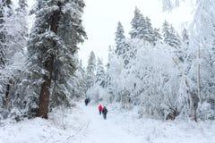 Gruppe einiger Leute auf Winter wandern in den Bergen, die Wanderer, die auf schneebedeckten Wald gehen Stockfotos
