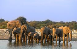 Gruppe Elefanten Lizenzfreie Stockfotografie