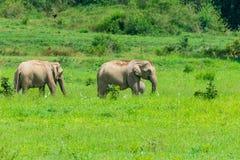 Gruppe Elefanten auf Wiese lizenzfreie stockbilder