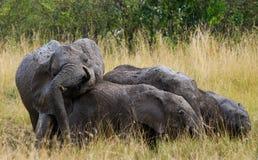 Gruppe Elefanten in der Savanne afrika kenia tanzania serengeti Maasai Mara Stockfotos