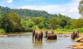 Gruppe Elefanten im Fluss Stockfotos