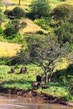 Gruppe Elefanten nähern sich Fluss Tarangire, Tansania Stockfoto