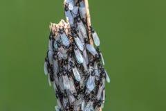 Gruppe fliegt mit Perlen-Flügeln stockfoto