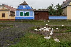 Gruppe Gänse wandert unter alten Häusern Lizenzfreie Stockfotografie