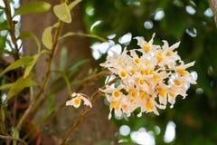 Gruppe gelbliche Orchideen stockbild