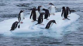 Gruppe Gentoo-Pinguine auf einem kleinen Eisblock stockfotos