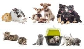 Gruppe Haustiere Lizenzfreie Stockfotografie