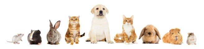 Gruppe Haustiere Lizenzfreies Stockfoto