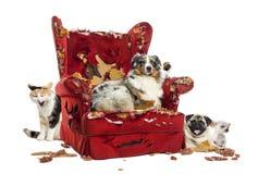 Gruppe Haustiere auf einem zerstörten Lehnsessel, lokalisiert Lizenzfreies Stockfoto