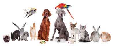 Gruppe Haustiere auf Weiß lizenzfreie stockbilder