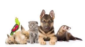 Gruppe Haustiere Getrennt auf weißem Hintergrund stockfotografie