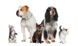 Gruppe Haustiere: Hunde und Katzen Stockfotografie