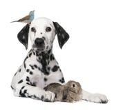 Gruppe Haustiere: Hundewelpe, Vogel, Kaninchen Stockfoto