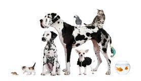 Gruppe Haustiere vor weißem Hintergrund Lizenzfreie Stockfotos