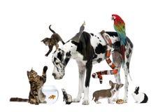 Gruppe Haustiere zusammen Lizenzfreie Stockfotografie