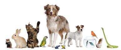 Gruppe Haustiere zusammen