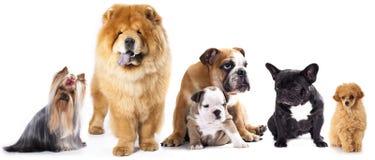 Gruppe Hunde stockfotos