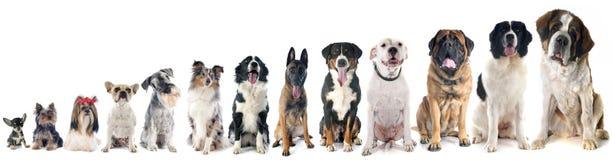 Gruppe Hunde lizenzfreies stockfoto