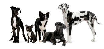 Gruppe Hunde Stockfotografie