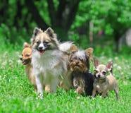 Gruppe Hunde. lizenzfreie stockfotos
