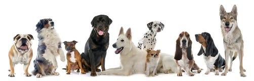 Gruppe Hunde Stockfoto