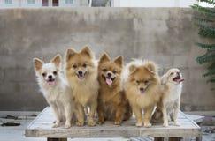 Gruppe Hunde auf hölzerner Tabellengruppe Hunden auf Tabelle mit Beton Stockfotografie