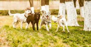 Gruppe Hunde, die draußen im Park spielen Lizenzfreie Stockbilder