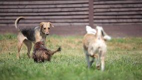 Gruppe Hunde, die im Hinterhof auf einem sonnigen spielen stock video