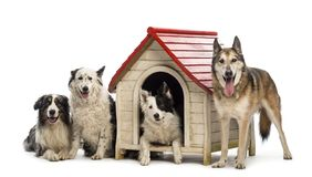 Gruppe Hunde herein und eine Hundehütte gegen weißen Hintergrund umgebend lizenzfreie stockbilder