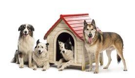 Gruppe Hunde innen und eine Hundehütte umgebend stockbilder