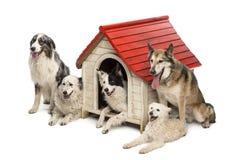 Gruppe Hunde innen und eine Hundehütte umgebend stockfotos