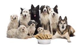 Gruppe Hunde mit einer Schüssel voll von den Knochen stockbilder