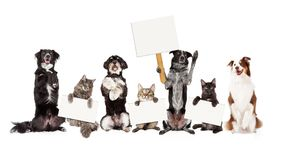 Gruppe Hunde und Katzen, die herauf das Halten von leeren Zeichen sitzen stockfotografie