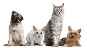 Gruppe Hunde und Katzen, die vor Weiß sitzen Stockbild