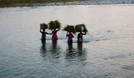 Gruppe indische Frauen, die Garben Gras auf ihren Köpfen tragen und Fluss in Jim Corbett National Park, Indien auf 10 kreuzen 20  Stockfotos