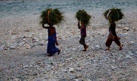 Gruppe indische Frauen, die traditionsgemäß Garben Gras auf ihren Köpfen auf Flussbank in Jim Corbett National Park, Indien fortf Stockbild