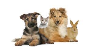 Gruppe junge Haustiere lizenzfreies stockfoto
