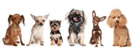 Gruppe junge Hunde lizenzfreie stockbilder