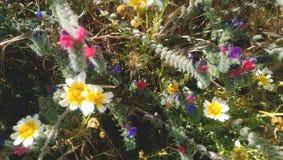 Gruppe junge verschiedene Wildflowers Selektiver Fokus Stockfoto
