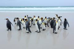 Gruppe Königpinguine, die vom Meer auf weißem Sandstrand mit Welle ein blauer Himmel zurückkommen Stockbilder