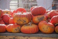Gruppe Kürbise für Halloween Lizenzfreie Stockbilder