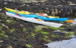 Gruppe Kajaks auf Meerespflanze-bedeckten Felsen Lizenzfreies Stockfoto